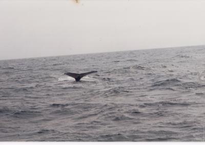033_1995 Bangor Maine Reunion