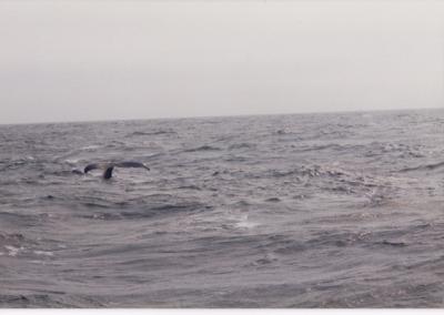 036_1995 Bangor Maine Reunion
